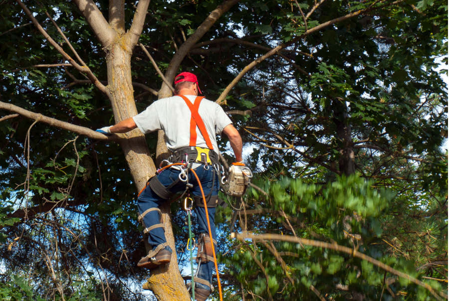 Tree Trimmer Workers Compensation
